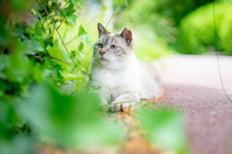 オールドレンズと猫ちゃん