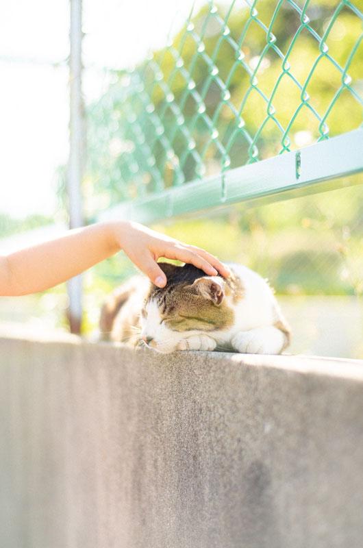 オールドレンズとのら猫