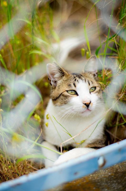 オールドレンズと猫