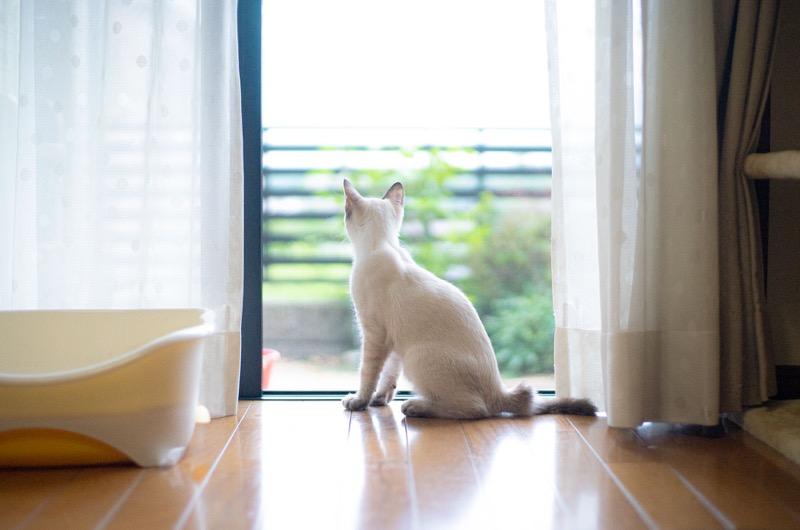 オールドレンズと家猫