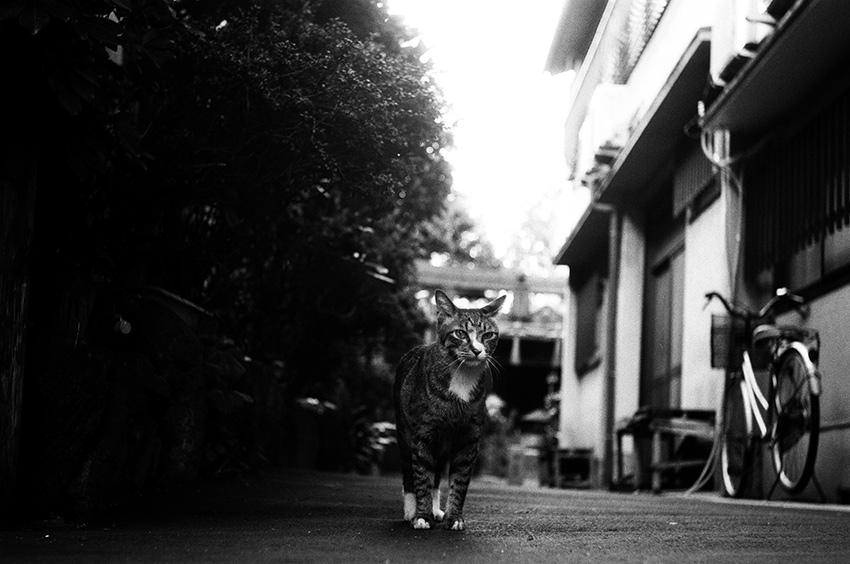 Leica Elmar 5cm F3.5
