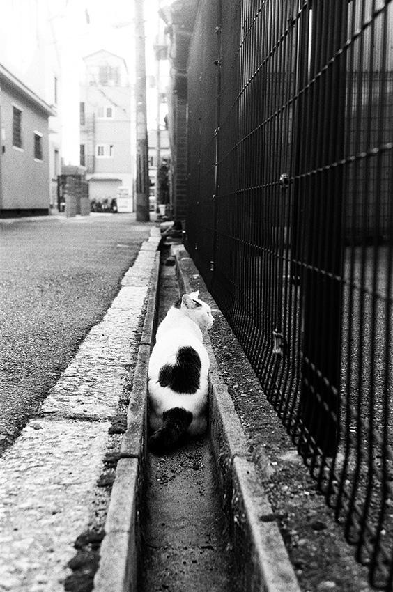 猫 ハート