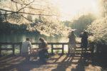 【みなさんの写真】「桜ってこうやって撮るんや!?」