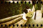 【東京フィルムカメラWS】1/26(日)オールドレンズ好きにオススメしたい。やっぱり面白い!!フィルムのトイカメラにもう一度光を!!