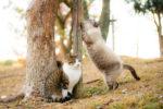 【大阪カメラワークショップ】3/1(日)地元の猫スポットなどを車でご案内-Vol.2