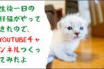 生後一日の仔猫がやってきたので、YouTubeチャンネル作ってみたよ