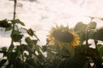 【連載コラム】湿度まで写す「Leica SUMMICRON-M 5cm F2(ズミクロン)」を使って、Leica M3 とSONY α7で撮り比べ